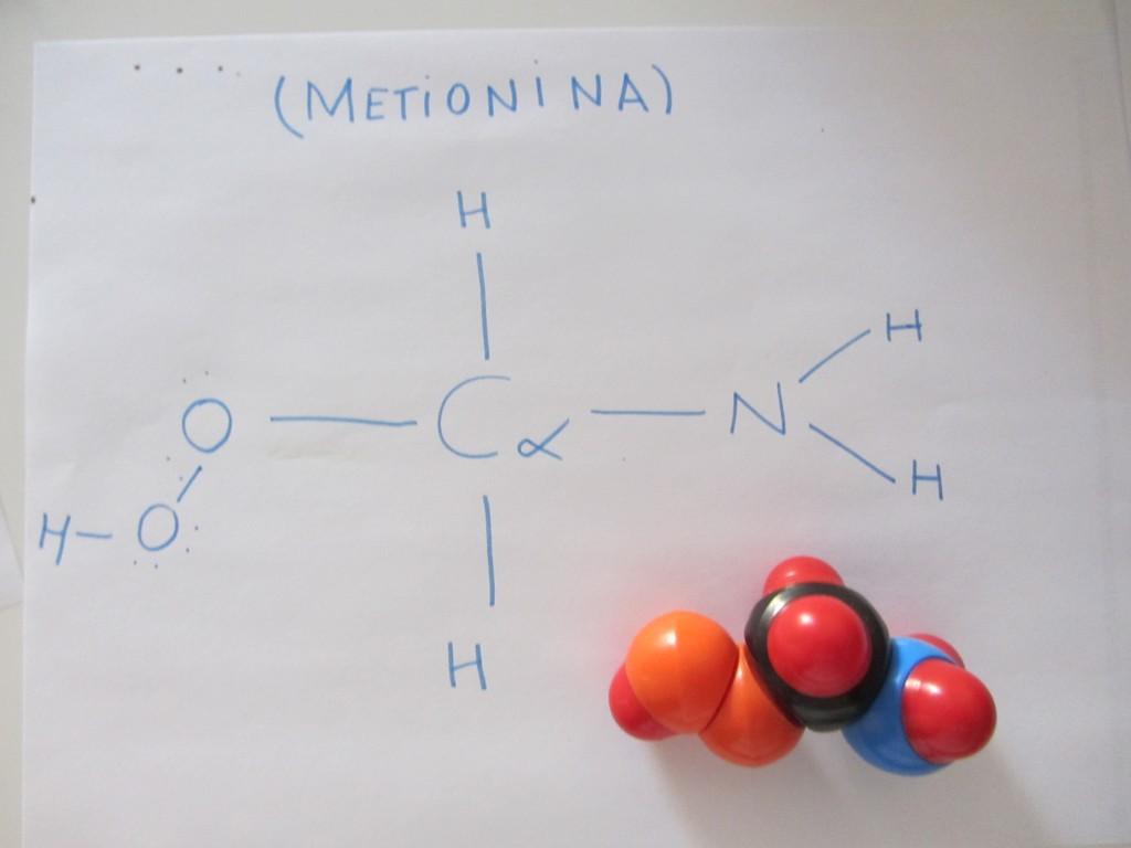 metionina 1024x768 Menos es más: modelos de bolitas y palillos (de dientes) para hacer moléculas en 3º de la ESO.