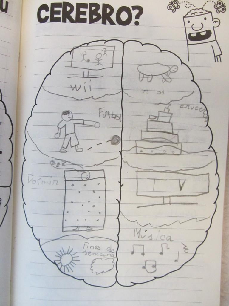 cerebro 3 768x1024 ¿Qué tiene mi sobrino de ocho años en el cerebro?